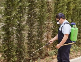 Man Spraying - Insect Extermination